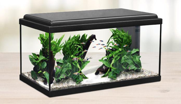 zooroyal-aquaristik-gutschein
